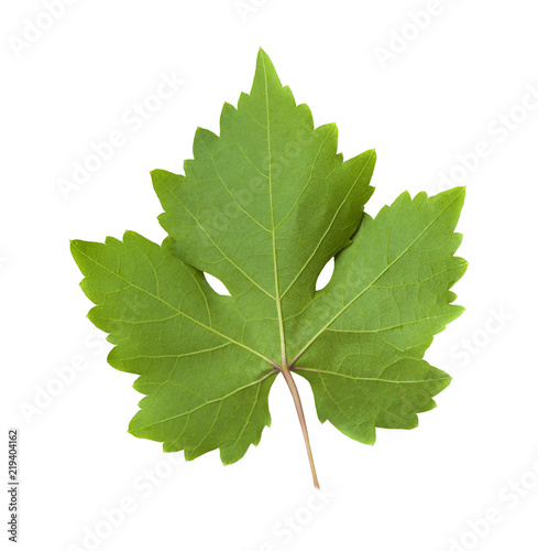 Green grape-leaf with clipping path isolated on white background.