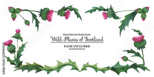 Head banner from thistles. Floral symbol of Scotland Wallpaper Mural
