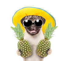 Funny Summer Dog With Sunglass...