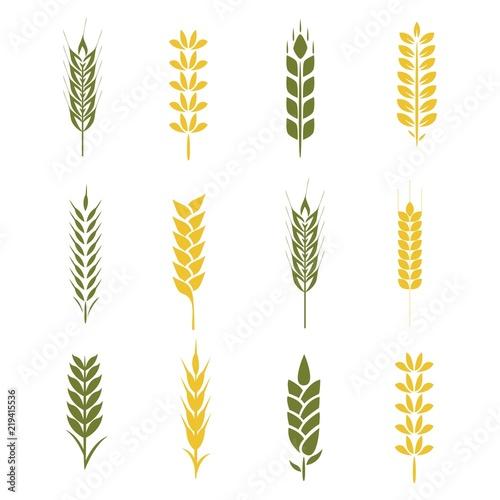 Obraz na plátně wheat paddy logo