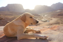 Dog At Sunset In The Mountains...