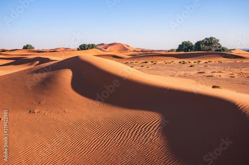 Poster de jardin Desert de sable Sahara desert