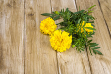 Yellow Tagetis On Wooden Table