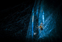 Spider On Web At Night Blue Tone