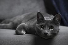Pet Cat Portrait