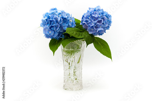 Staande foto Hydrangea Flowers and leaves of Hydrangea macrophylla in a beautiful glass vase with water droplets. In the center of the photo.