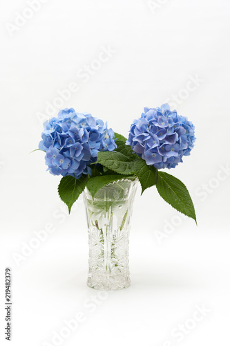 Flowers and leaves of Hydrangea macrophylla in a beautiful glass vase with water droplets. Vertical shot. Space for text on top.
