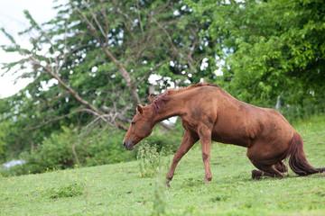 Pferd fällt hin Unfall