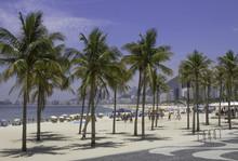 Palm Trees On The Beach Near Leme In Rio De Janeiro Brazil
