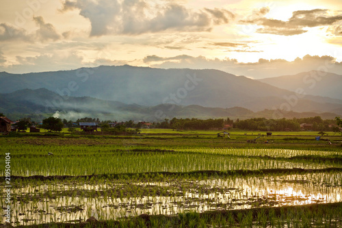 Wall Murals Bali Fried rice farmer Asia nature background