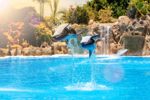 Show Of Beautiful Dolphin Jump...