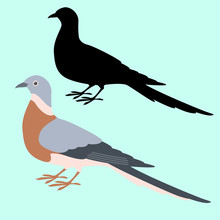 Dove Bird Vector Illustration ...
