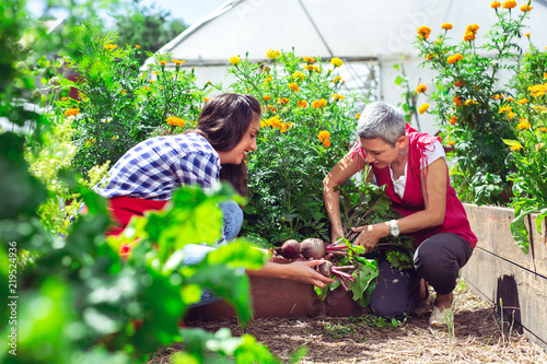 Foto Young girl with mother working in vegetable garden
