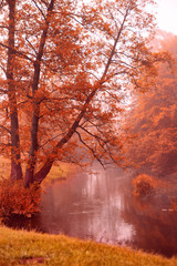Obraz Alden trees on foggy riverbank