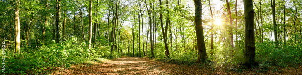 Panorama of a forest with path and bright sun shining through the trees