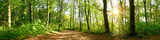 Fototapeta Las - Panorama of a forest with path and bright sun shining through the trees