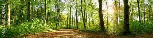 Fototapeten Wald Panorama of a forest with path and bright sun shining through the trees
