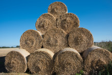 Large Round Hay Bales Stacked In The Field After Harvesting The Corn