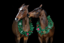 Two Bay Horses With Christmas ...