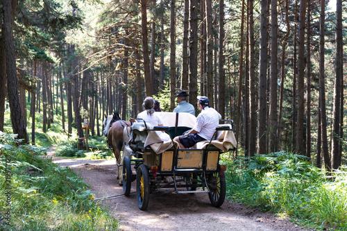 Fotografía Carrozza nel bosco in Trentino Alto Adige