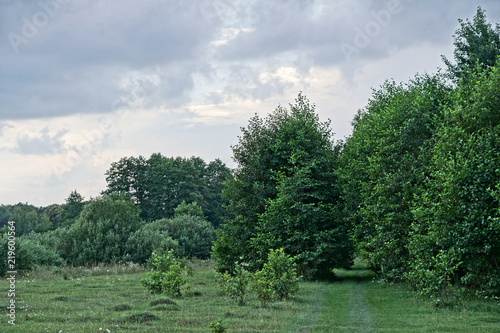 Poster Khaki Beautiful evening landscape already with dark trees. Autumnal summer background for design