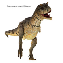 Carnotaurus Sastrei Dinosaur On White - Carnotaurus Was A Carnivorous Theropod Dinosaur That Lived In Patagonia, Argentina During The Cretaceous Period.