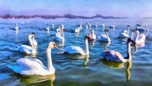 Oil Painting. Art Print For Wall Decor. Acrylic Artwork. Big Size Poster. Watercolor Drawing. Modern Style Fine Art. Painting For Sale. Beautiful Nature Landscape. Wonderful View. White Swans. Pond.