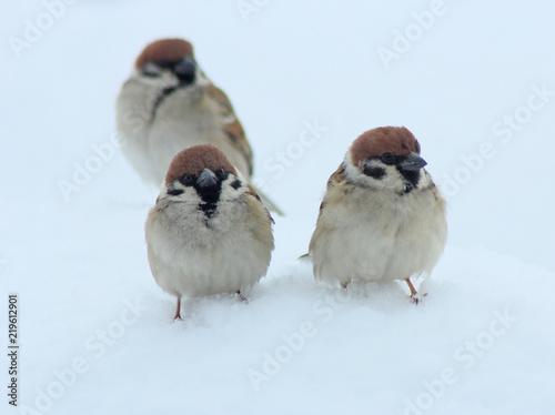 Foto op Plexiglas Vogel 雀