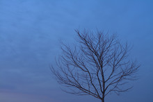 Leafless Tree Under Night Sky