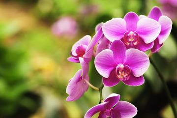 Fototapeta na wymiar beautiful orchid flower blooming at rainy season