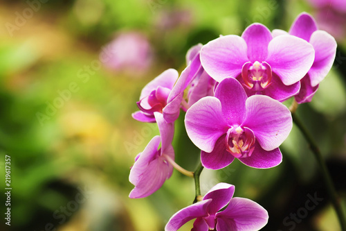 Obraz na plátne beautiful orchid flower blooming at rainy season