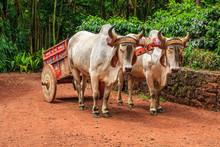 Oxcart Costa Rica 1
