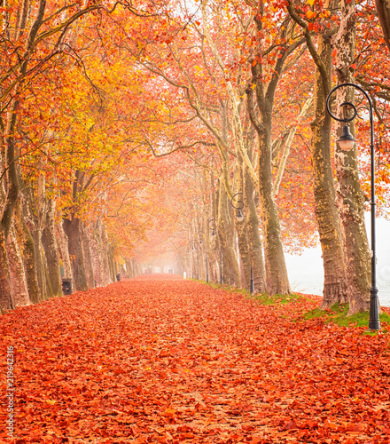 Foto op Canvas Herfst Nice autumnal scene at lake Balaton, Hungary