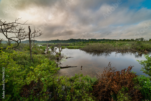 Foto op Plexiglas China landscape, mangroves