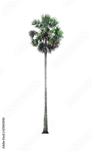 Deurstickers Palm boom Green palm tree isolated on white background of file with Clipping Path .