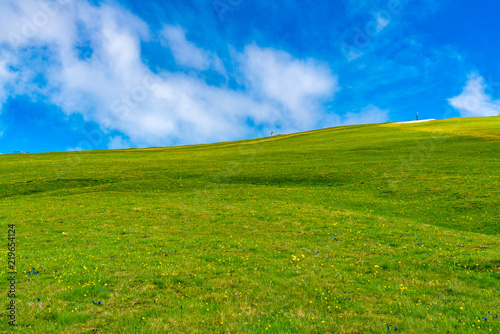 Fototapeta Green field of the yellow flowers on the hill obraz