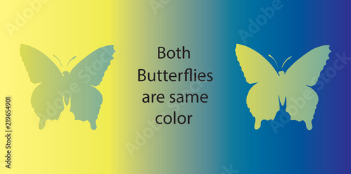 Fototapeta premium Złudzenie optyczne. Oba motyle są tego samego koloru