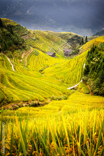 Tuinposter Oranje Rice terrace Long Ji China