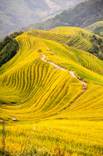Rice terrace In long Ji China