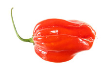 Red Habanero Pepper Isolated O...