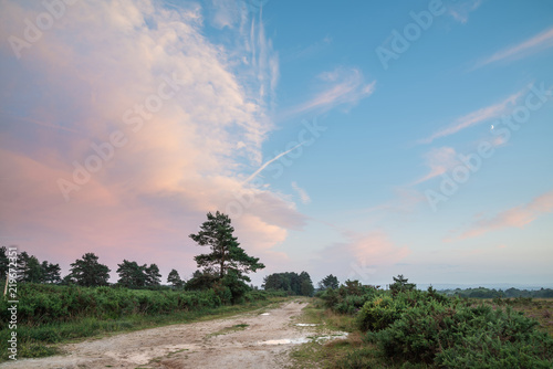 Spoed Foto op Canvas Blauw Beautiful Summer sunset landscape image of Ashdown Forest in English countryside with vivd colors