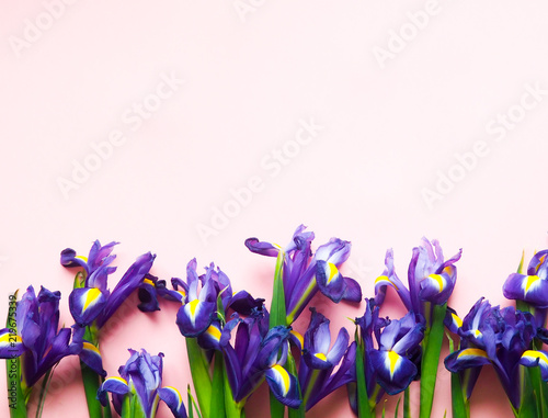 Poster Iris Floral pattern of yellow flowers, on a pink background, pattern flowers