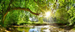 canvas print picture - Beautiful forest panorama with brook and bright sun shining through the trees