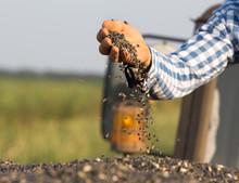 Farmer Holding Sunflower Seeds In Hand
