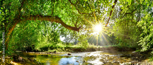 Fototapeta Beautiful forest panorama with brook and bright sun shining through the trees obraz