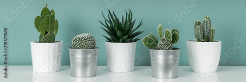 Modern room decoration. Collection of various potted cactus house plants on white shelf against pastel turquoise colored wall. Cactus plants banner.