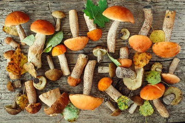 Variety of uncooked wild forest mushrooms yellow boletus, birch mushrooms, russules over dark textured rusty background. Rustic style, natural day light. Top view, food background concept