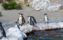 Penguins Near A Water Pool