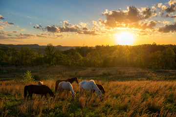 Free range horses at sunset, Appalachian Mountains, Kentucky