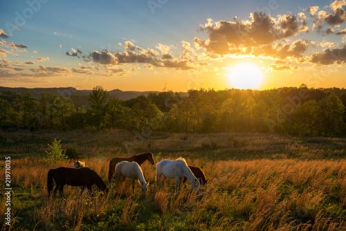 Free range horses at sunset, Appalachian Mountains, Kentucky
